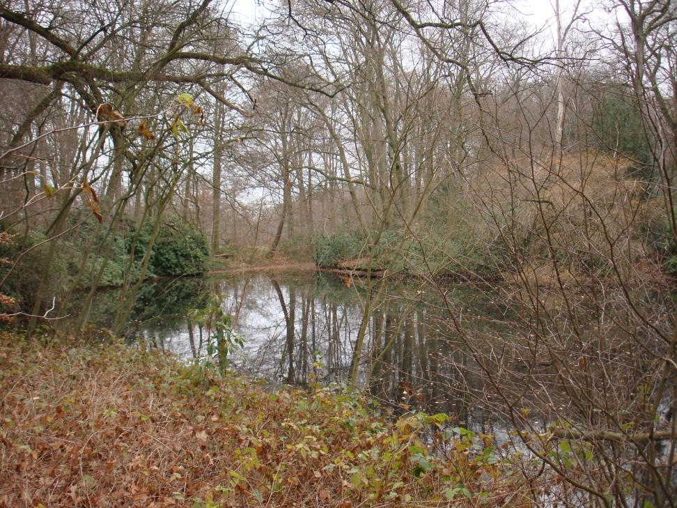 natuurlijke-omgeving